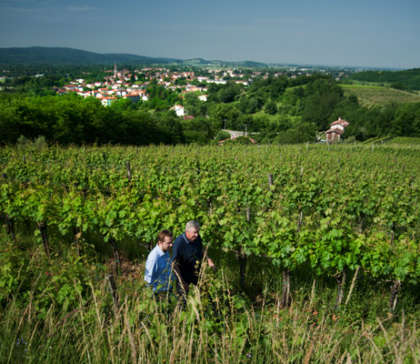 Gradis'ciutta wines receive organic certification!