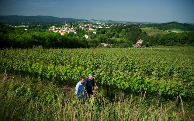 Des vins de Gradis'ciutta reçoivent la certification bio!